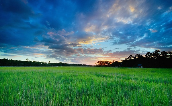 BEST-OF-SOUTH-CAROLINA South Carolina Charleston Marsh 102552038