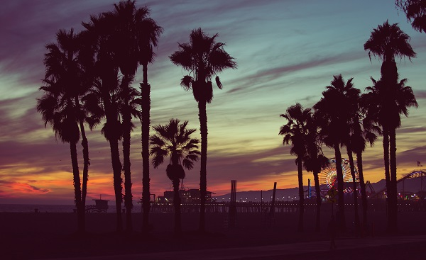 BUS-CAS-CAN-CALI Sunset colors with palms silhouettes in Santa monica, Los angeles. concept about travels 327531674
