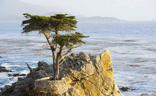 KIDS-GO-KALIFORNIEN Kalifrornien Monterey The Long Cypress Tree-17 Mile Drive 161451131