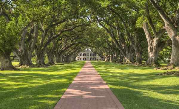 ROCK-HIGHWAY New Orleans Oak Alley Plantation Tree Tunnel 104799662